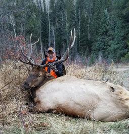 Hornady's ELD-X in 6.5 creedmoor is enough bullet for elk!