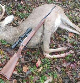 Hoosier buck and .243 ELD-X