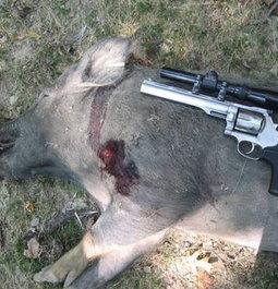 future boar rug
