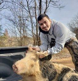 Big boar down