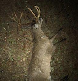 Biggest buck to date