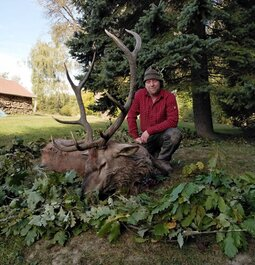 My first Red Deer Bull