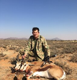 Springbuck in the Karoo