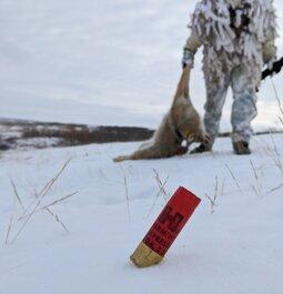 Shotgun coyotes