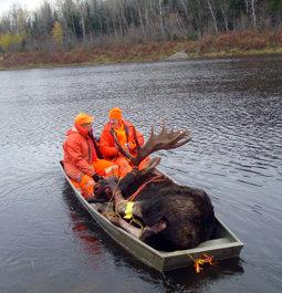 Northern Ontario Record Moose