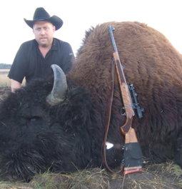 Woods Bison