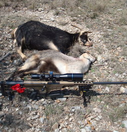 Wild Spanish goats are no match for the ELD-X