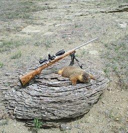 6mm 105 AMax vs big rodent